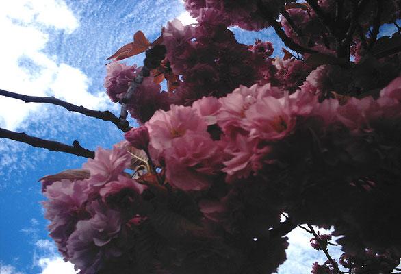花を探す日曜日14
