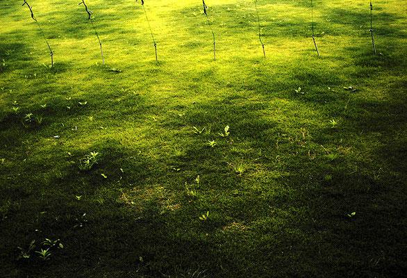 緑/夢の中の色