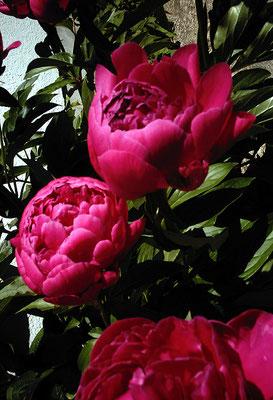 花を探す日曜日45