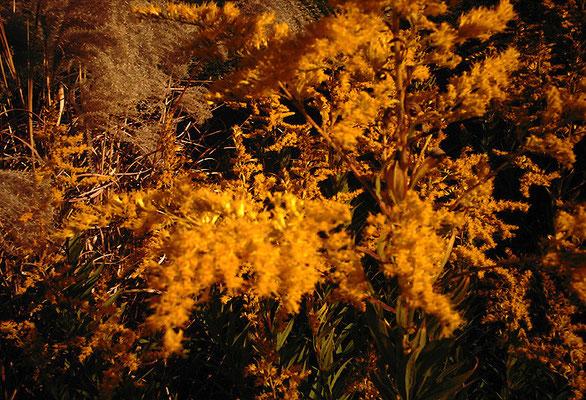 黄色く迫る秋