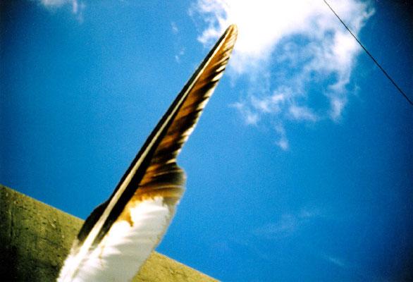 かつてとやがて21/翼の夢