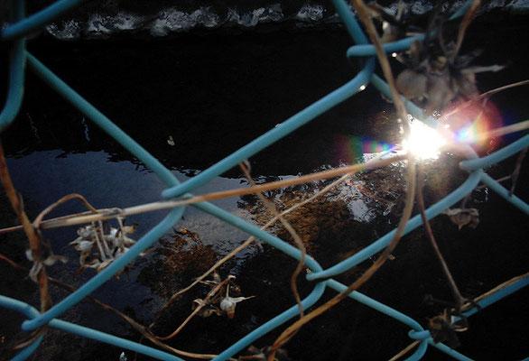 HIKARI/きらめく水面