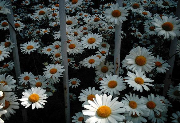 花を探す日曜日38