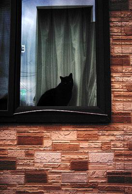 こんにちは窓辺の黒猫