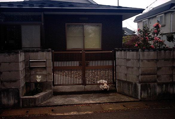 夢中歩行15/這い出る犬
