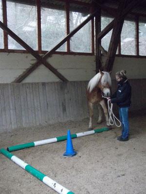 Seitwärtstreten über Stangen, um dem Pferd einen Rahmen zu geben