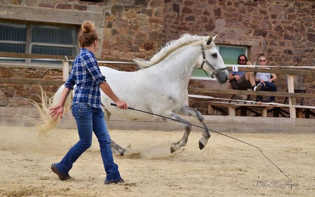Freiarbeit mit dem Pferd zur Verbesserung der Kommunikation - Bild von SHoKo Foto