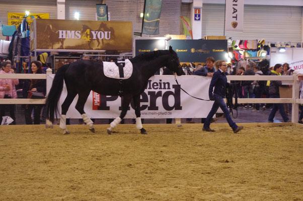 Dem Pferd Zeit geben, um die Umgebung und die Menschen kennen zu lernen - Bild von Linda Weritz - IIPKW