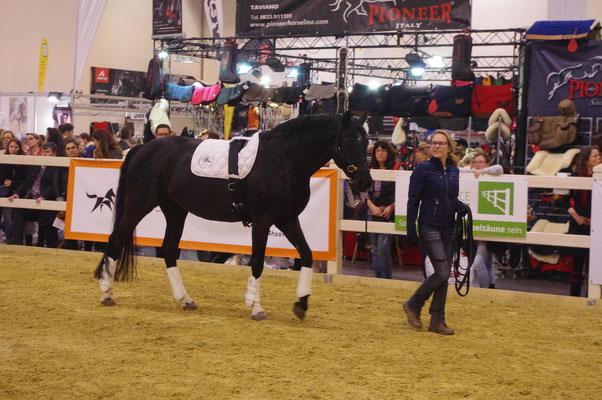 Führtraining für Mensch und Pferd - eine gute Grundlage, um die Situation kennenzulernen und eine gemeinsame Verbindung zu schaffen - Bild von Linda Weritz - IIPKW