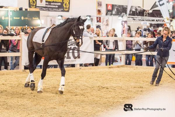 Doppellonge mit beantwortung der kleinsten Zeichen des Pferdes - Bild von Stefan Roy Photography