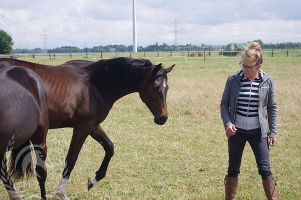 Ein Pferd aus der Herde lösen  - Bild von Linda Weritz - IIPKW