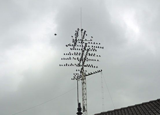 Birds on the antenna.