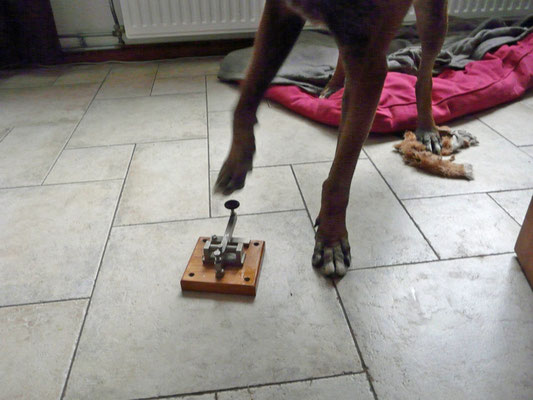 Morse code is easy my dog can do it too.