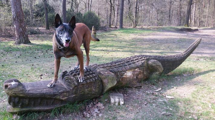 Chico met krokodil
