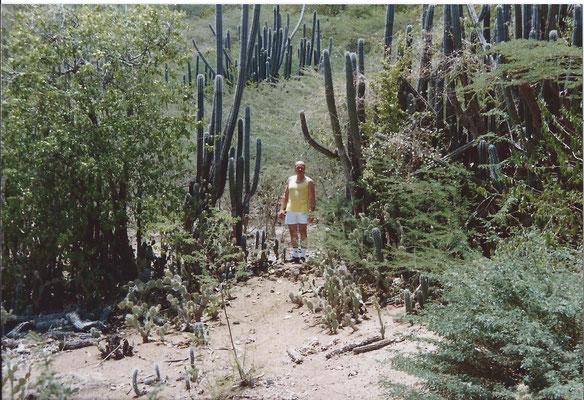 Curacao 1989