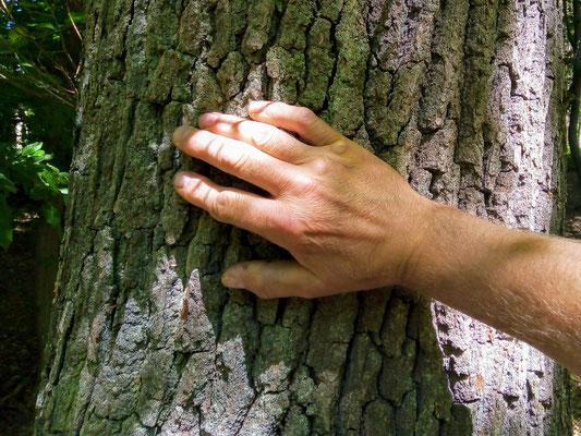 Holz beruhigt und gibt Energie. Man kann es fühlen...