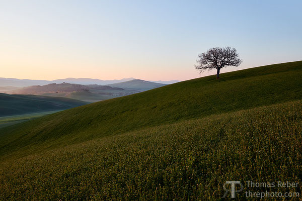 Italy, Val d'Orcia, solitary tree