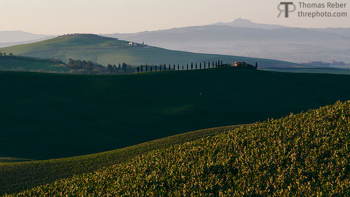 Italy, Val d'Orcia, layers of green