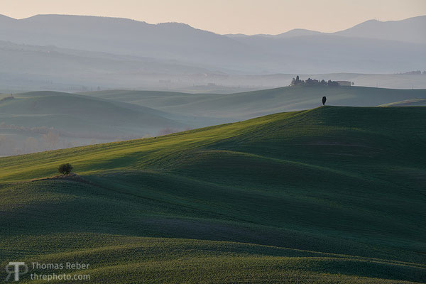 Italy, Val d'Orcia, solitary cypress