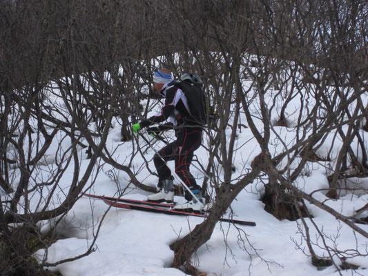 Anfangs musste unser Förster seine ganze Erfahrung einbringen und uns durch den Irrwald führen