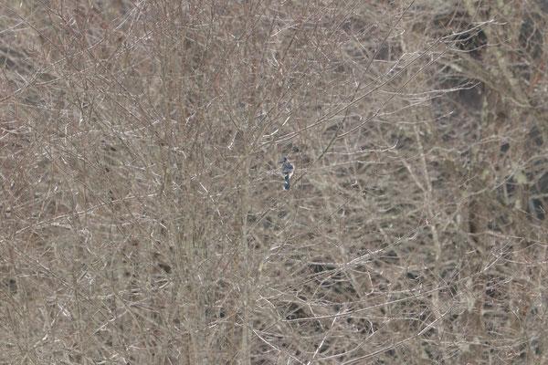 """""""Mais comment vais-je réussir à l'avoir au milieu de ce fouillis ?"""" Thundering Brook Falls, VT, USA. Canon EOS 80D, EF 70-300mm f/4-5.6 IS II USM à 300mm, f/5,6, 1/500 s, 640 ISO"""