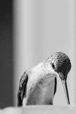 Bande-annonce des photos de colibri à venir