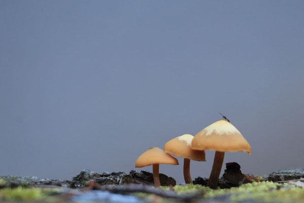 Sleeping Beauty, des petits champignons très poétiques sur la descente