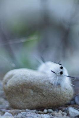 Hickory tussock moth larva, Moreau Lake State Park, NY, USA. Canon EOS 80D,  EF 50mm f/1.8 STM, f/1.8, 1/400 s, 100 ISO