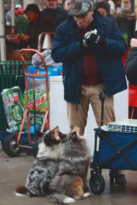 Victorian Stroll, Troy, NY, USA