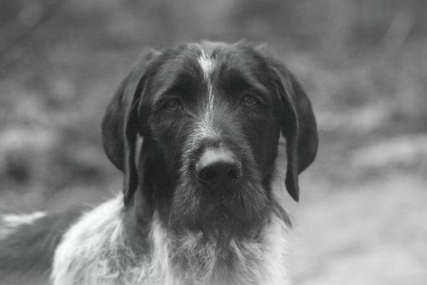 Le chien de Benoit