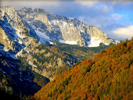 Naturjuwel Buchenwälder im Nationalpark Kalkalpen