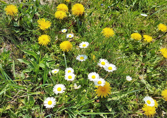Rund ums Haus Löger zieht der Frühling ein