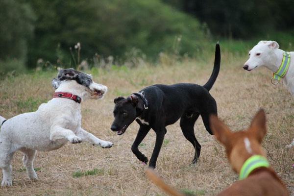 hondenjas, onderkoeling bij honden, thermische beelden hond, kou bij honden, plezier voor je huisdier