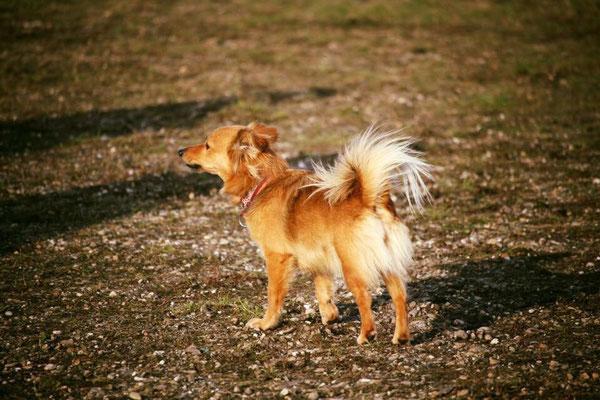 hondenjas, onderkoeling bij honden, thermische beelden hond, kou bij honden