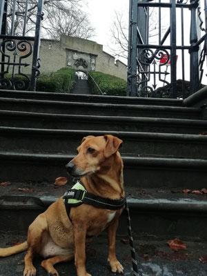 Van der Werfpark, leiden, stad&land wandeling, wandelroute Leiden, rondwandeling, wandelen met de hond, plezier voor je huisdier