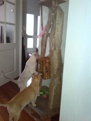 krabpaal, katten, DIY, doe-het-zelf