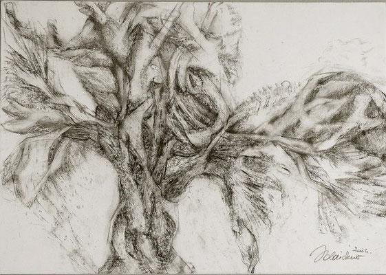 Baum | Pastellkreide/Papier | 2004 | 60x42cm