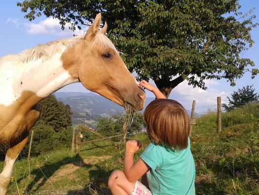 Abendidylle auf der Pferdeweide