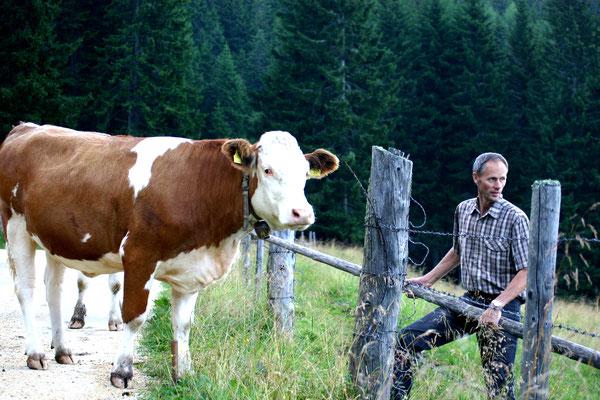 Der Bauer Werner und seine Rinder