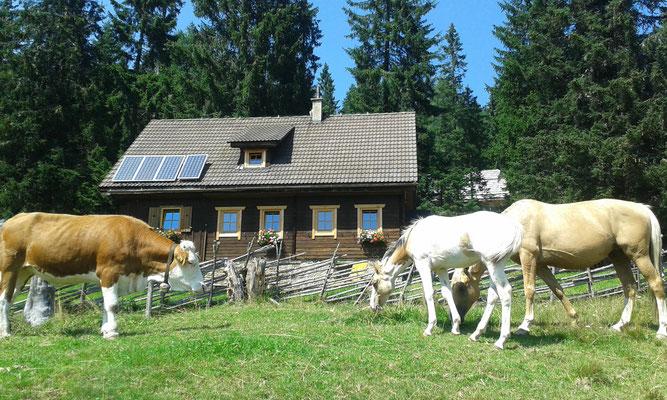 Kuh und Pferd sagen Guten Tag