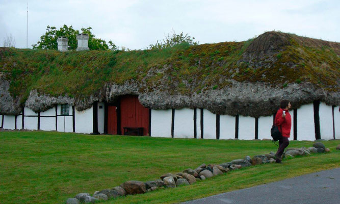 Seagrass used for old house roofing in Denmark
