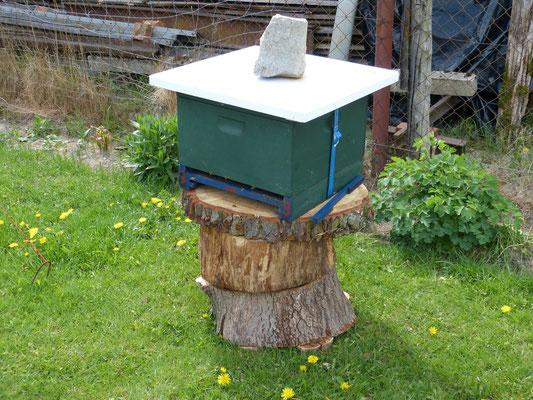 Auch dieser Bienenstock wurde mit einfachen Mitteln etwas höher gestellt.