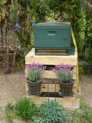 Ein Honigbienenvolk in etwas höherer Aufstellung zu vereinfachten Bearbeitung. Zudem wurde der Standplatz sehr schön dekoriert.