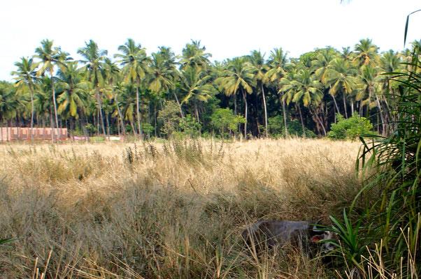 Surroundings Jungle dance