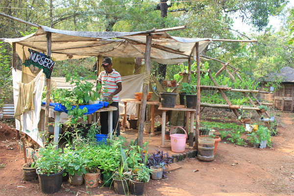 permaculture in jungle dance cafe