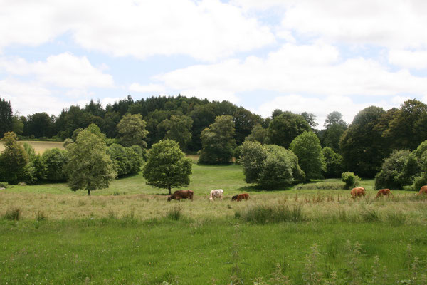 Un paysage forestier, côté est du territoire (commune de Rempnat).