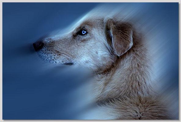 Abgebildet in Foto Color: 10_01_079 - Ausgabe Oktober 2001 Bild 79 (als Musterbild verwendet in Heft 01/2002)