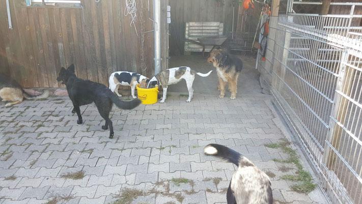 Die Hundeschar