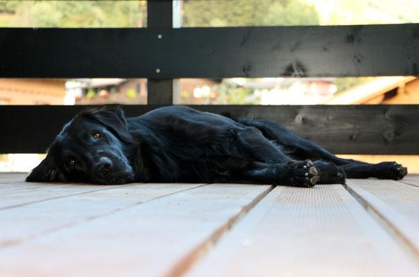 Meo's ganz persönlicher Erholungsort - der Balkon im Hotelzimmer