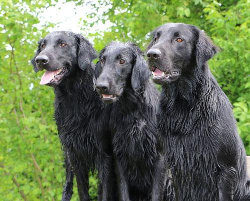 Anjuk, Daley und Meo